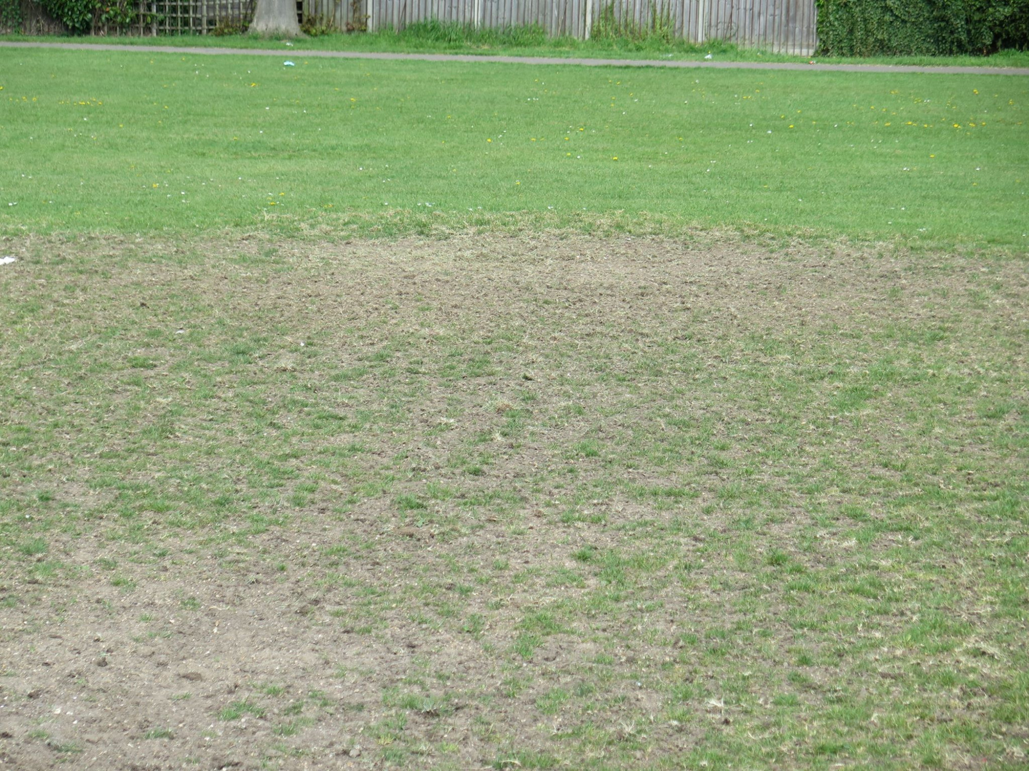 Some good reseeding by the Council. We now need it to be wet and warm. Not everyones choice tho.